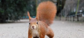 stellamatutina-scoiattolo