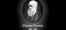 stellamtutina-darwin