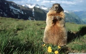 stellamatutina - marmotta