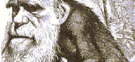 stellamatutina-darwin-scimmia